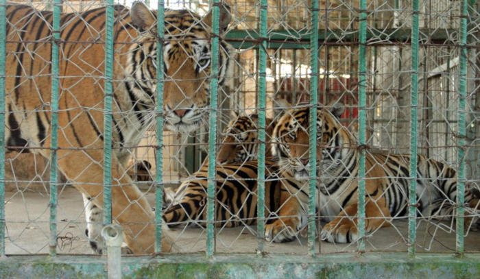 Lào chưa kiểm soát được buôn bán động vật hoang dã