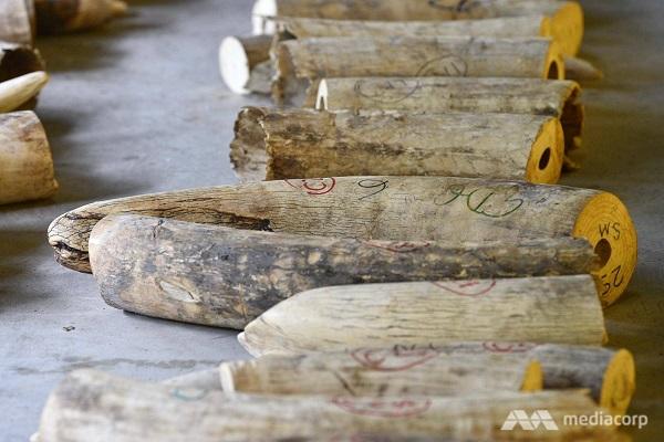 Singapore cấm hoạt động buôn bán ngà voi từ 2021