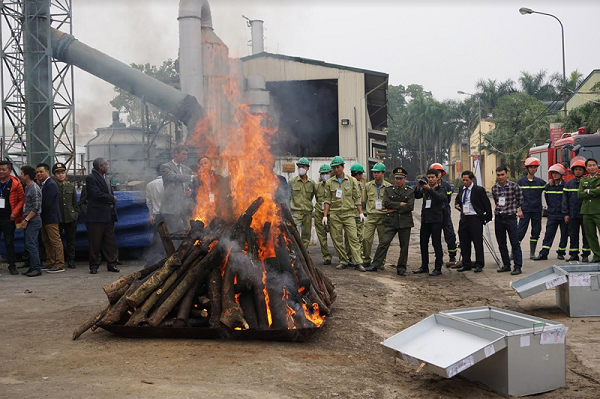 Cần biến tiêu hủy ngà voi trở thành thông lệ tại Việt Nam!