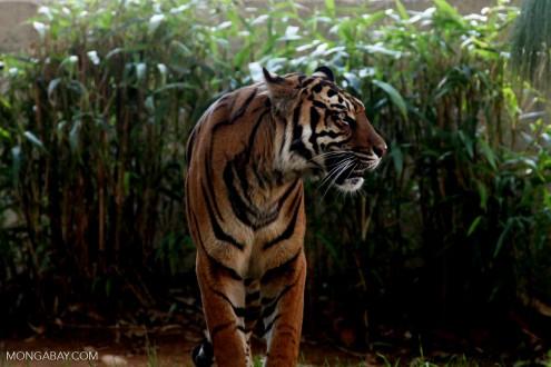 Úc và EU ủng hộ cải cách hệ thống cấp phép CITES
