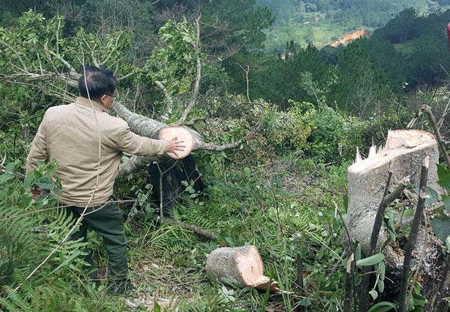 Bắt quả tang 11 đối tượng phá rừng phòng hộ