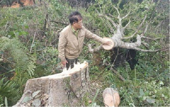 Lâm Đồng bắt nhóm đối tượng hạ gần 18.000m2 đất rừng phòng hộ