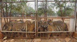 Phòng, chống nạn mua bán, giết hại động vật quý hiếm