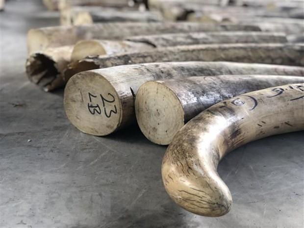 Kenya phạt nặng các du khách mang trang sức ngà voi