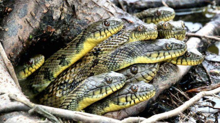 Hà Nội: Tiếp nhận 187 cá thể động vật hoang dã